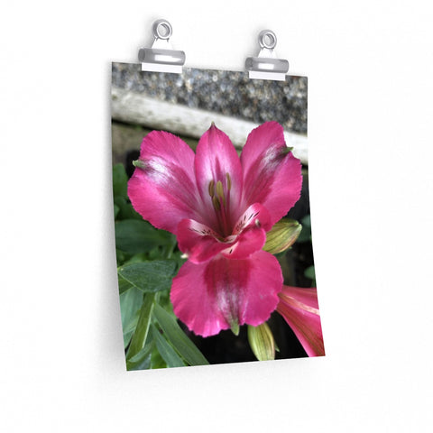 Peruvian Lily Posters