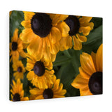 Sweet Black Eyed Susan Canvas Gallery Wraps