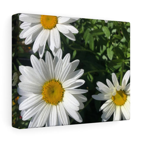 Daisy Canvas Gallery Wraps
