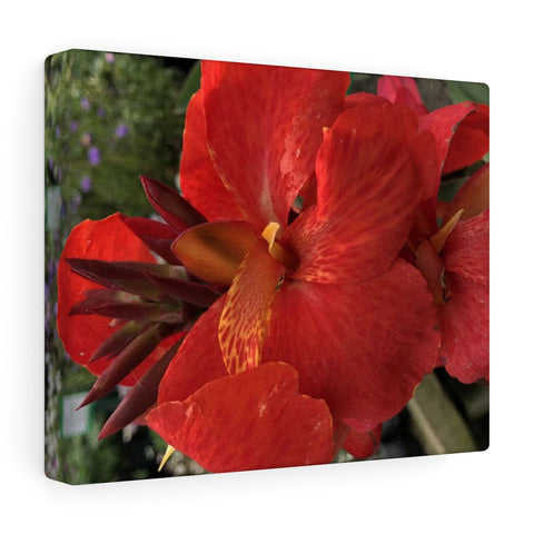 Canna Lily Canvas Gallery Wraps