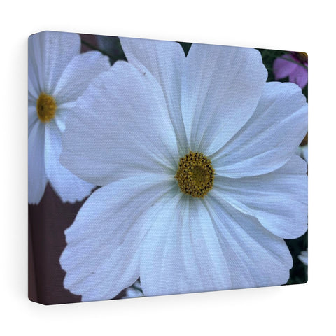 Garden Cosmo Canvas Gallery Wraps