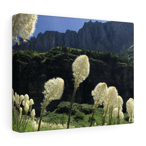 Bear Grass Canvas Gallery Wraps