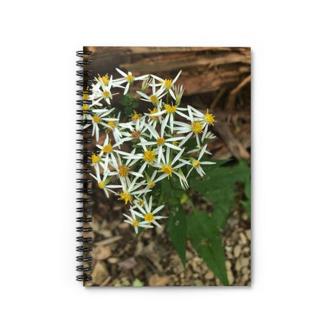 White Wood Aster Notebook - Ruled Line