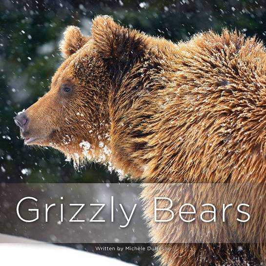 Lap Book: Grizzly Bears