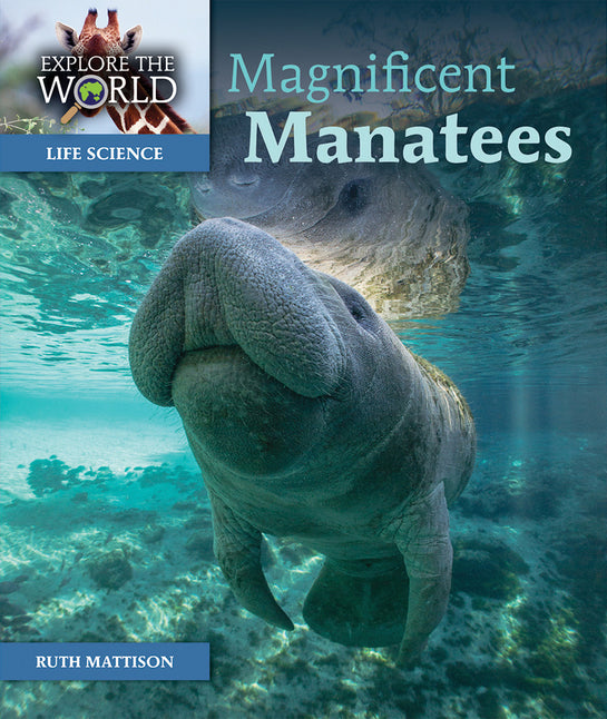 Magnificent Manatees