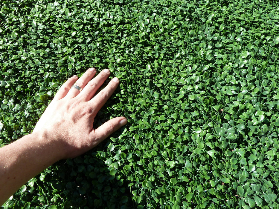 "Copy of Artificial Boxwood Panels Topiary Hedge Plant UV Protected Privacy Screen Outdoor Indoor Use Garden Fence Backyard Home Decor Greenery Walls Pack of 12 Pieces 20"" x 20"" inch Dark Green"