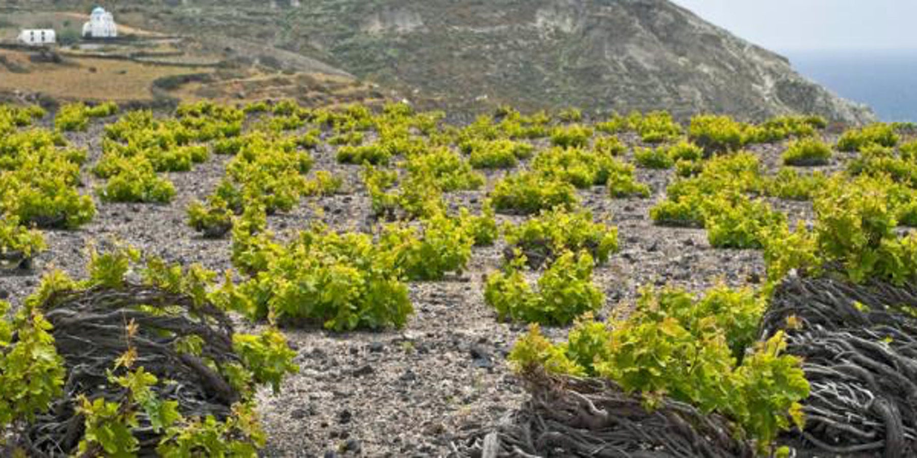 Tribute To Assyrtiko 5/7/19