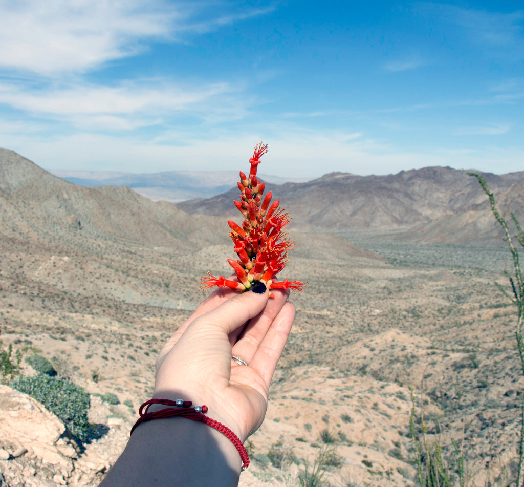 Ocotillo & Pedicularis: a love song to the flow of life