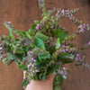 Tulsi, Pinon and wood smoke: a box of transition and resilience