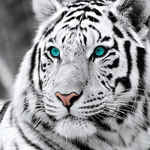 For Beginners Tiger Picture 5d Diy Cross Stitch Diamond Painting Kits UK QB6431