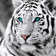 For Beginners Tiger Picture 5d Diy Diamond Painting Kits UK QB6431