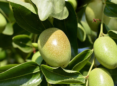 Jojoba: one of your best skin's allies