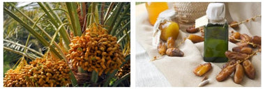 Desert date: the fruit from the desert that will make your skin glow!