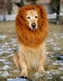 Lion Mane Wig Costume For Dog - Realistic & Funny