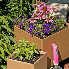 Make an Eco-Friendly Mini Herb Garden