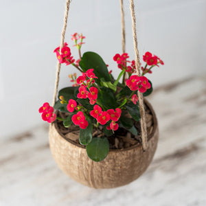 Coconut Shell Hanging Planter