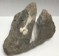 This Unique Business card holder is perfect for the office, home business or for that special someone.   This business card holder contains a Herkimer Diamond, Druzy and Calcite Crystals in Vugs in a Dolomite Matrix.  This piece was mined in Herkimer New York.  Formed over 500 millions years ago this is a one of a kind gift that cannot be duplicated.  Business Card Gap is 6mm