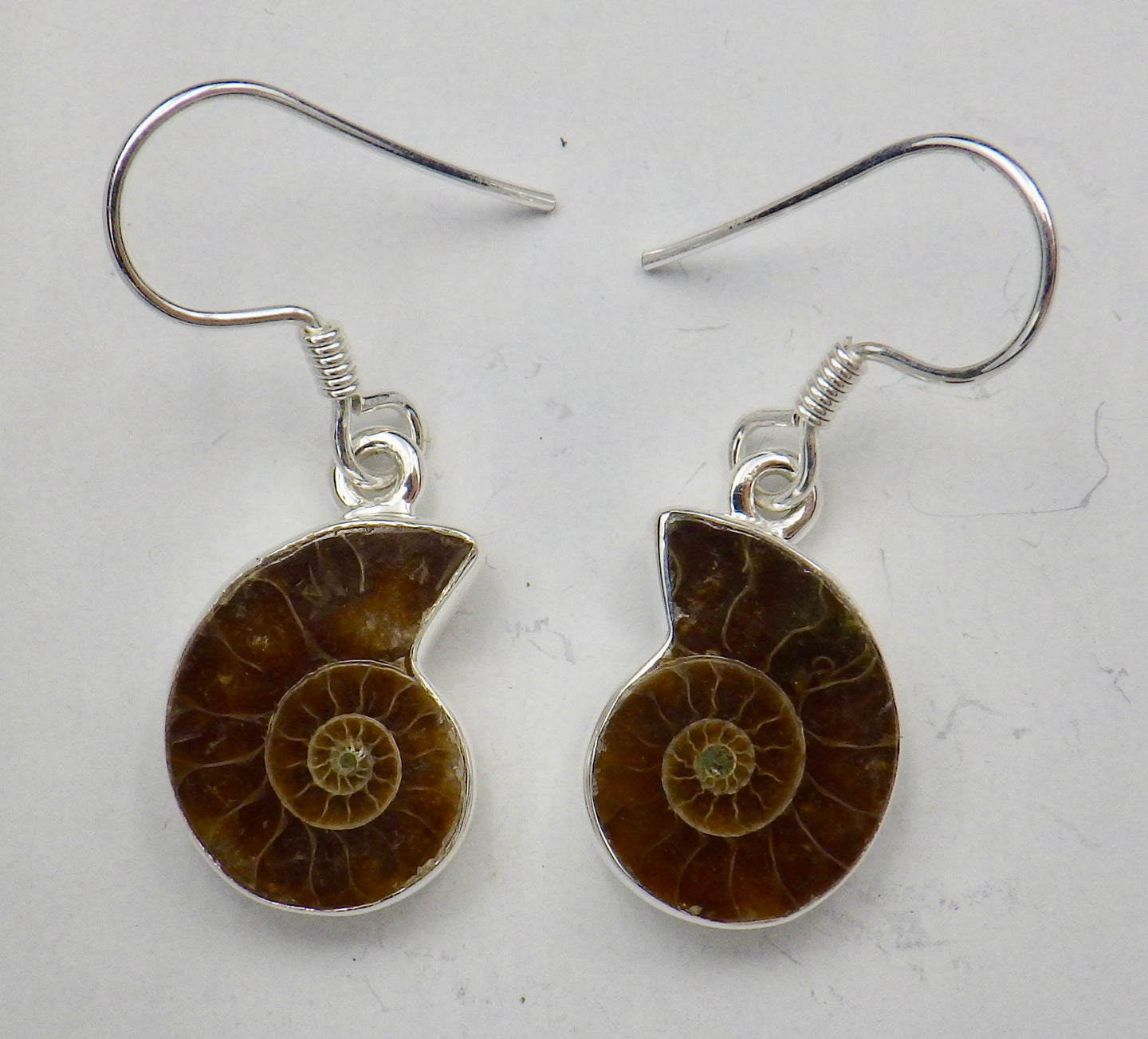 Fossil Ammonite Drop Silver Earrings | Earthfound.co.uk