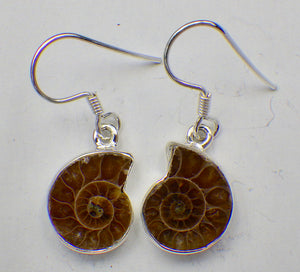 Fossil Ammonite Silver Drop Earrings |Earthfound.co.uk