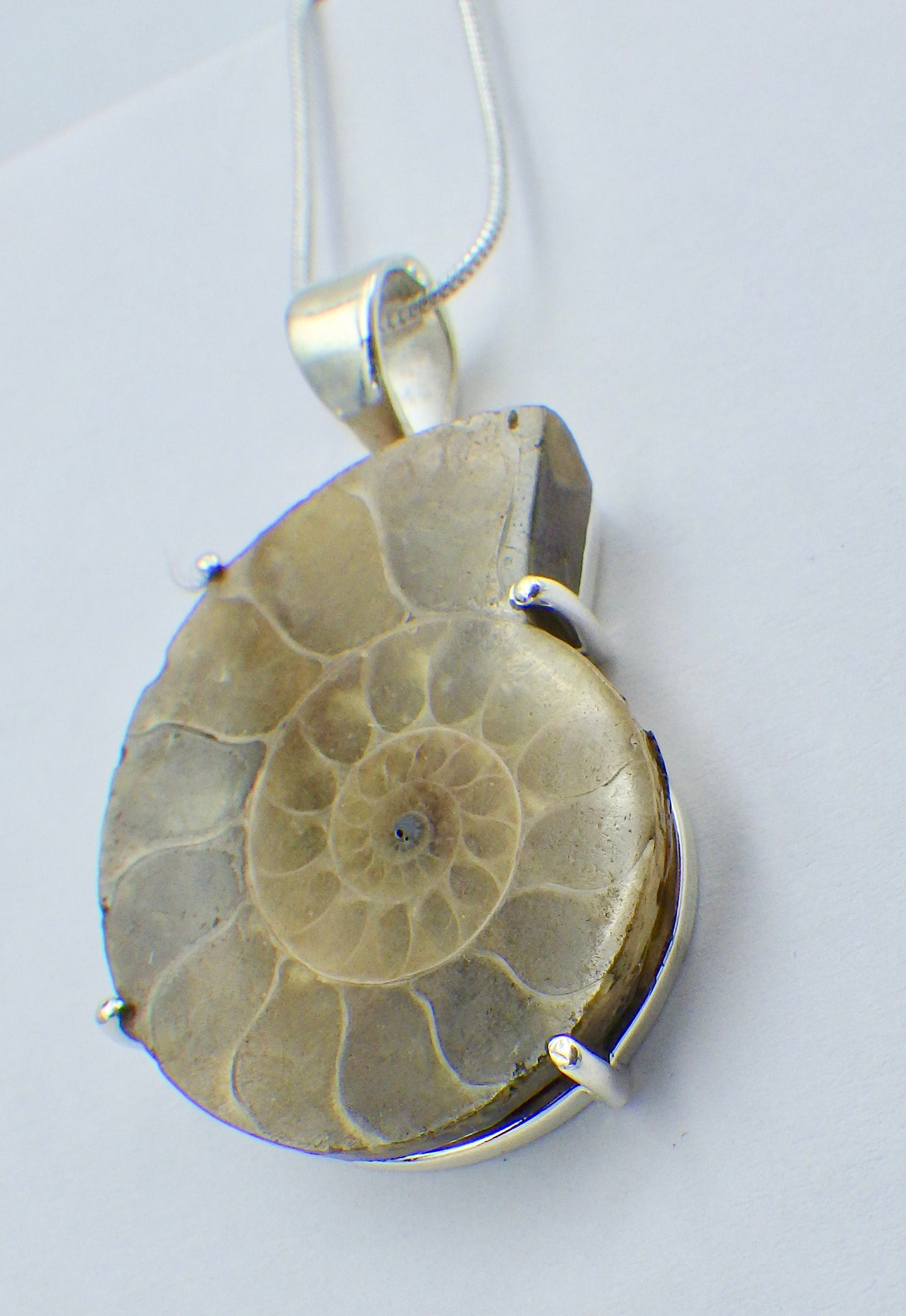 Fossil Ammonite Silver Pendant |Earthfound.co.uk