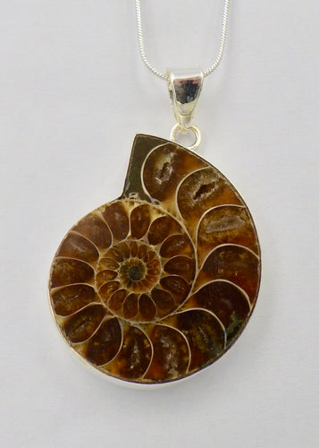 Fossil Ammonite Silver Pendant | Earthfound.co.uk