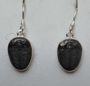 Fossil Trilobite Silver Drop Earrings | Earthfound.co.uk