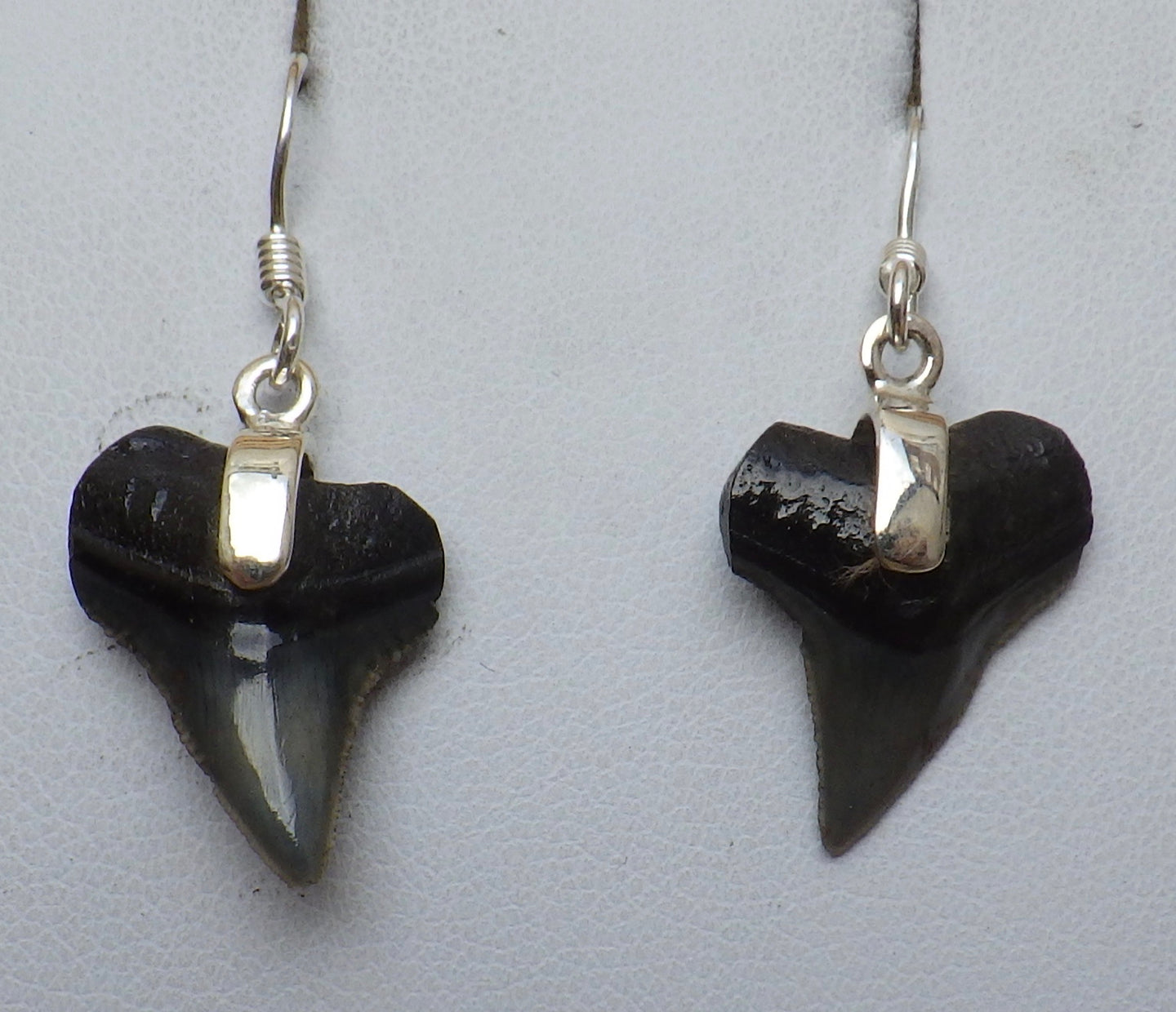 Fossil Shark Tooth Silver Drop Earrings | Earthfound.co.uk
