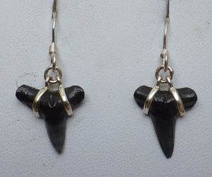 Fossil Shark Tooth Silver Drop Earrings |Earthfound.co.uk