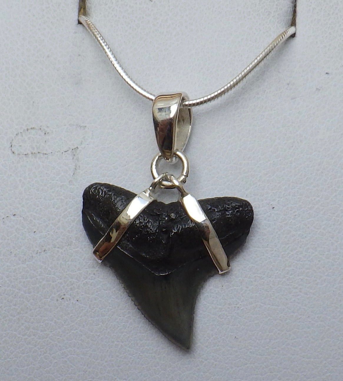 Fossil Shark Tooth Silver Pendant | Earthfound.co.uk