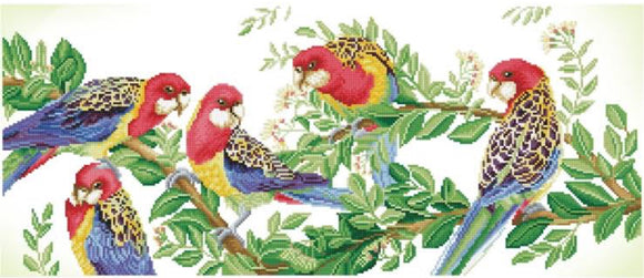 DIAMOND DOTZ MED EASTERN ROSELLA
