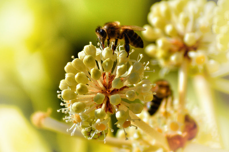Bee Pollen And Royal Jelly