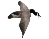 Deck Boss Flying Canada Goose Decoy - Free + Shipping