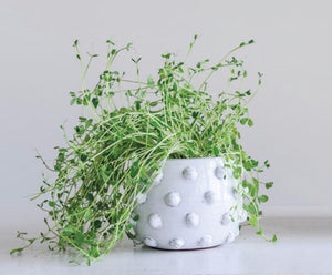 White Dot Planter