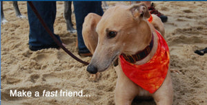 Community Service: Grass Puppy Helps Grateful Greyhounds!