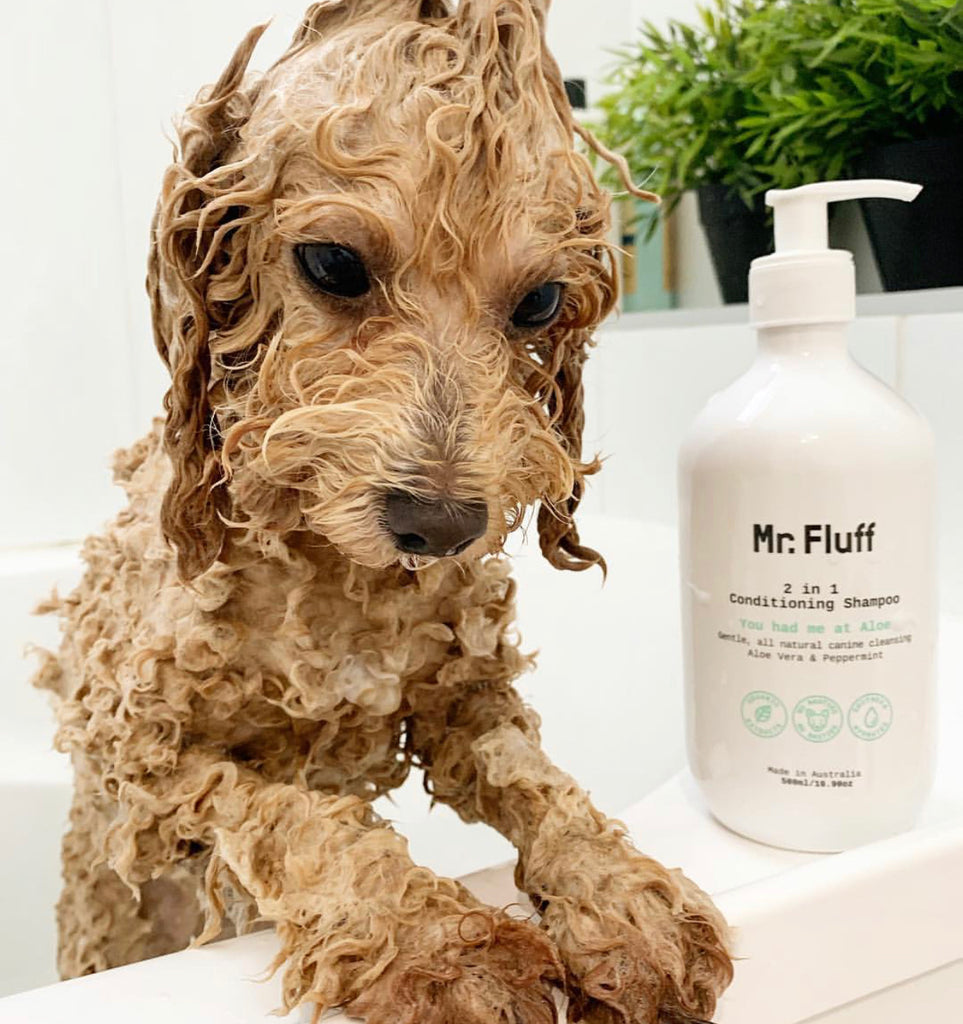 You Had Me At Aloe 2 in 1 Conditioning Shampoo | Aloe Vera & Peppermint | Mr. Fluff