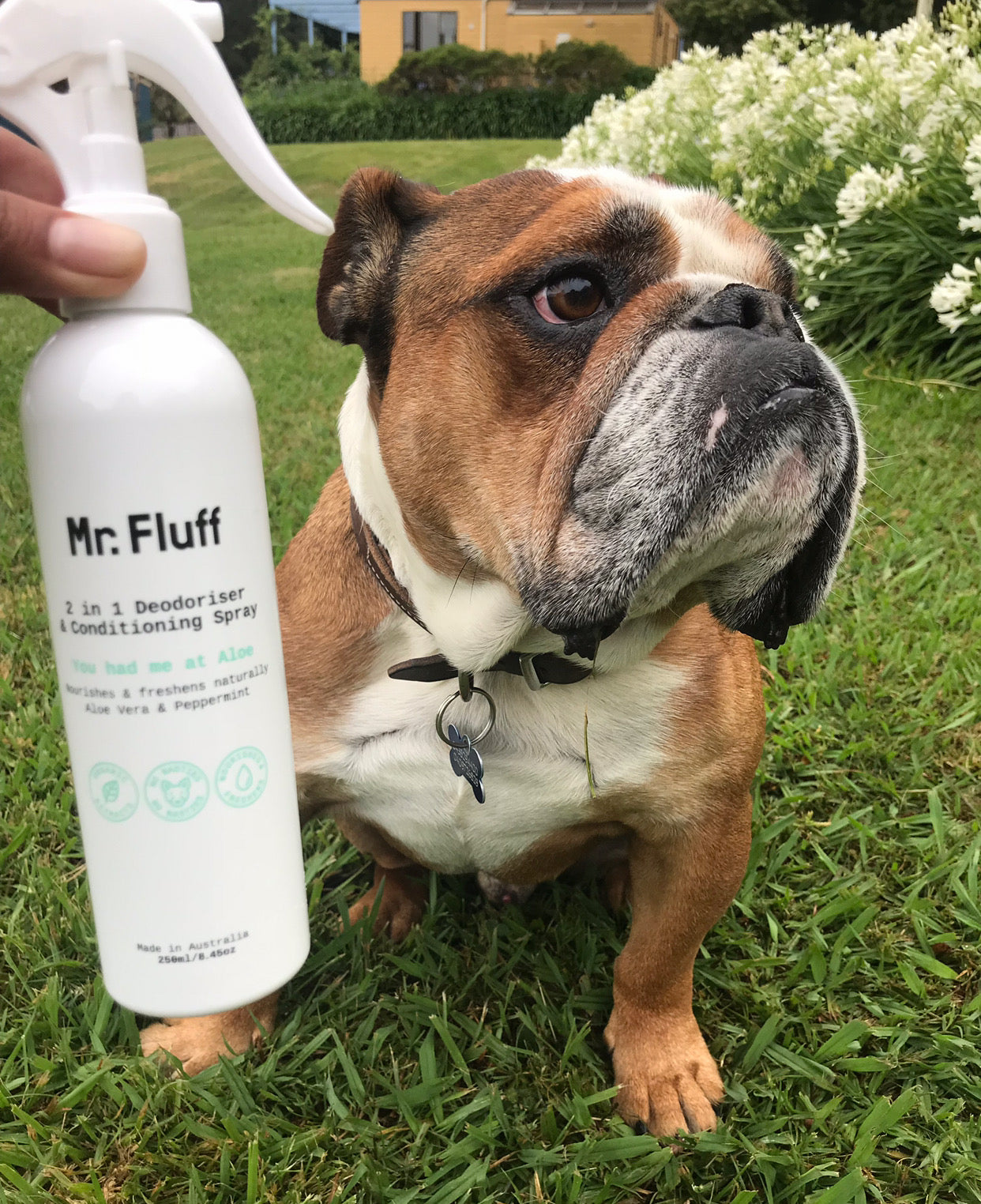 You Had Me At Aloe 2 in 1 Deodoriser & Conditioning Spray | Aloe Vera & Peppermint | Mr. Fluff
