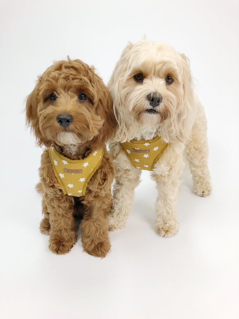 Mustard Star Harness | The Pup Club