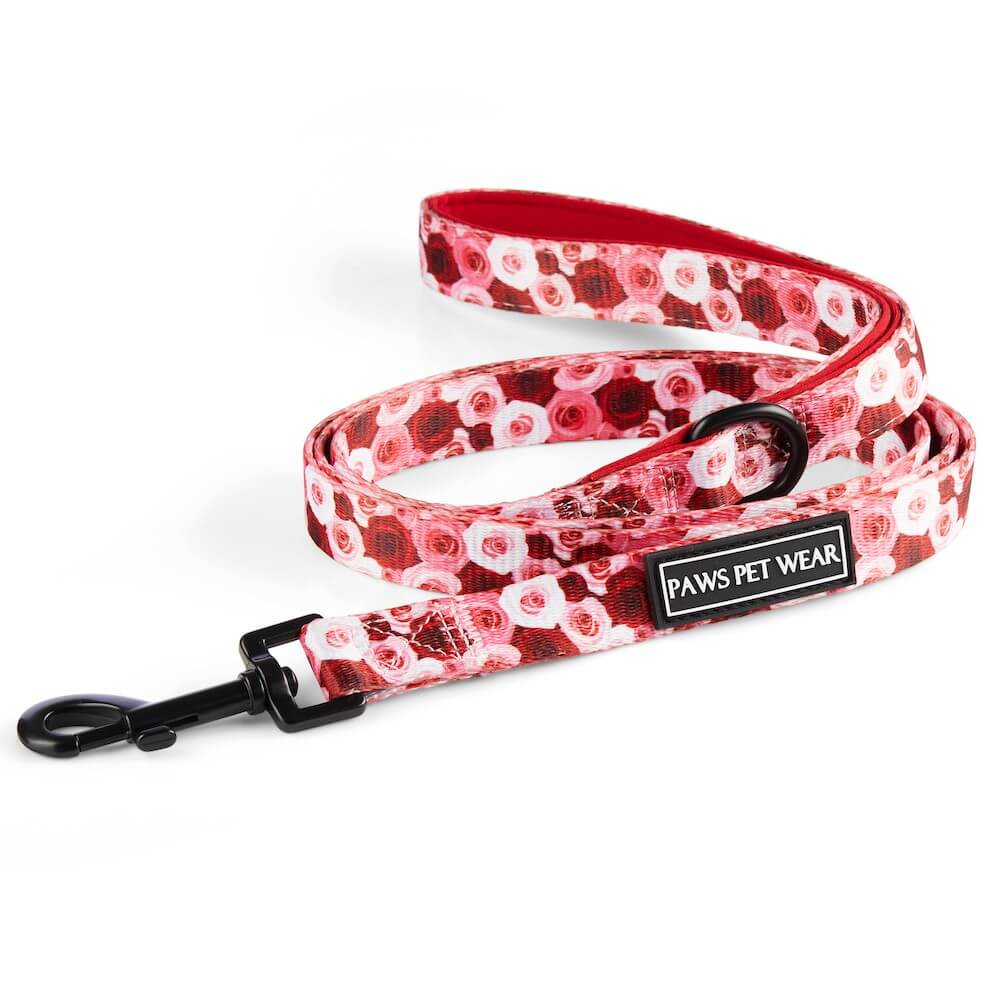 Feeling Rosé Leash | Paws Pet Wear