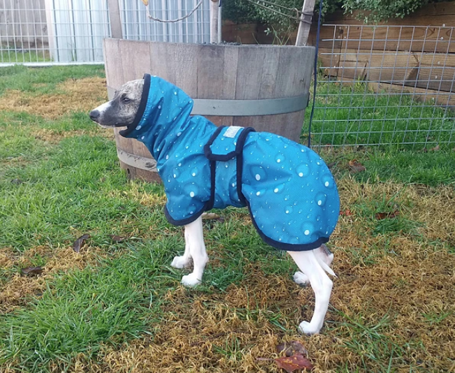 Blue Drops - Whippet Rainproof Coat | CozyGreys