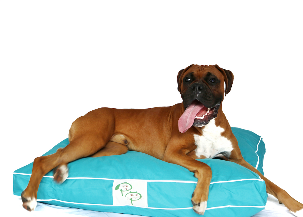 Blue Waterproof Designer Dog Bed | Pet Pouch