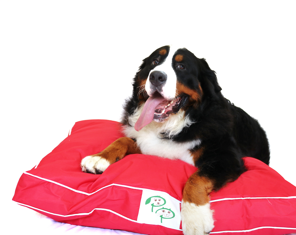 Red Waterproof Designer Dog Bed | Pet Pouch