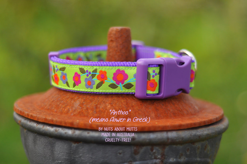 Anthos Ribbon Dog Collar | Nuts About Mutts