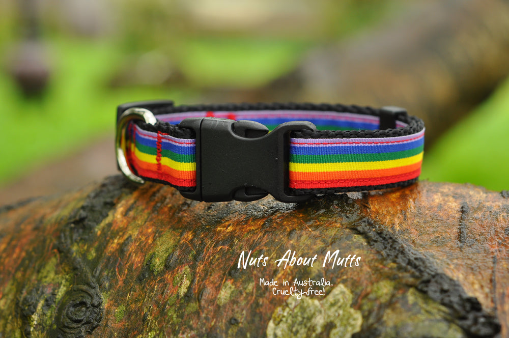 LGBT Pride Rainbow Dog Collar Wide Width 25mm | Nuts About Mutts
