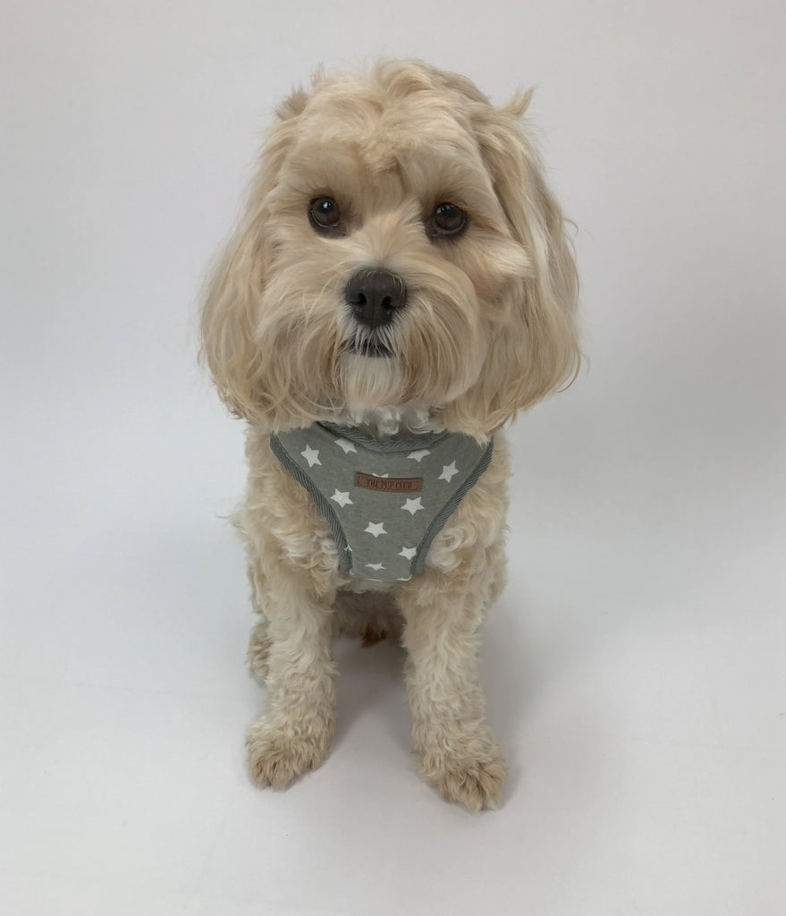 Grey Star Harness | The Pup Club