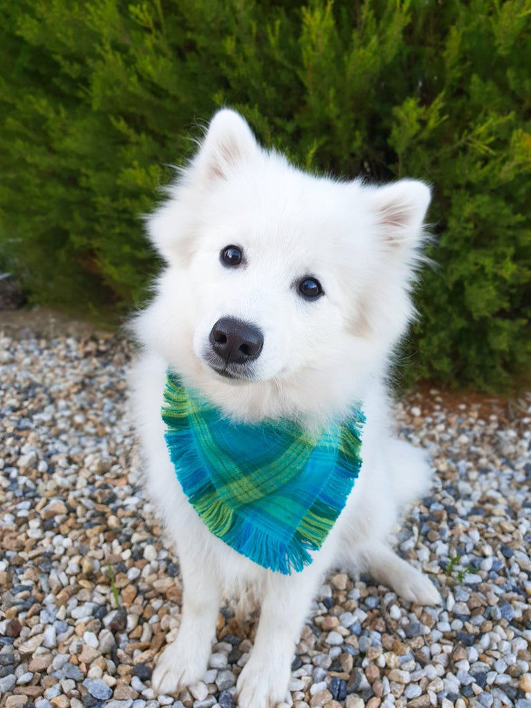 Evergreen Frayed Plaid Bandana | Pets Galore Artistry