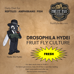 Fresh Flightless Hydei Fruit Fly Culture