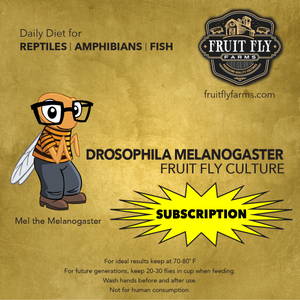 Flightless Melanogaster Fruit Fly Subscription