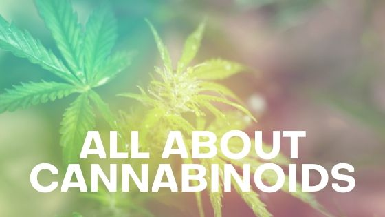 All About Cannabinoids