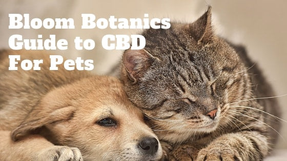 Bloom Botanics Guide to CBD for Dogs, Cats and Pets