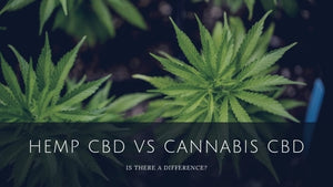 The Difference Between Hemp CBD Oil and Cannabis CBD Oil